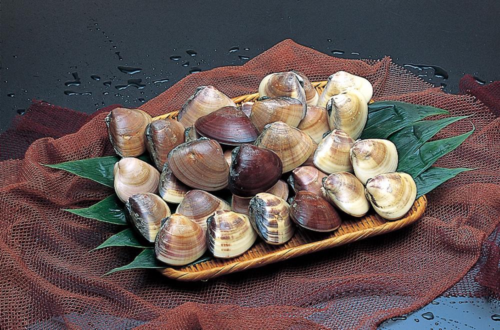 鹿岛滩蛤蜊