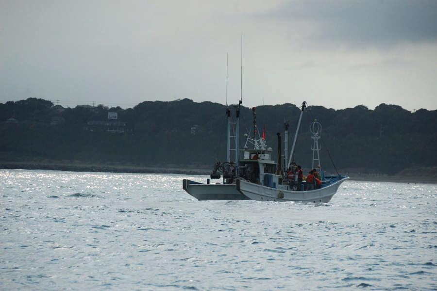 시라스 잡이 (어업 체험)