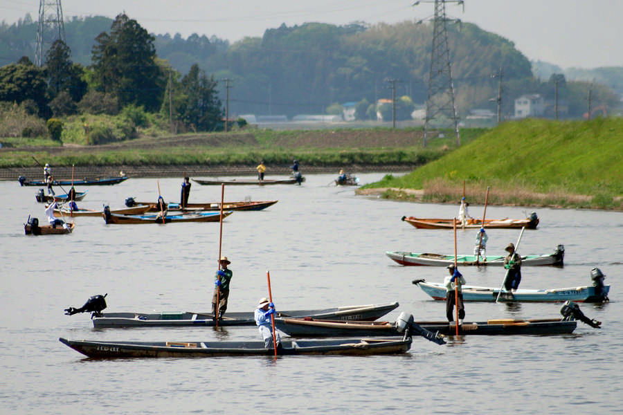 涸沼川のシジミ漁