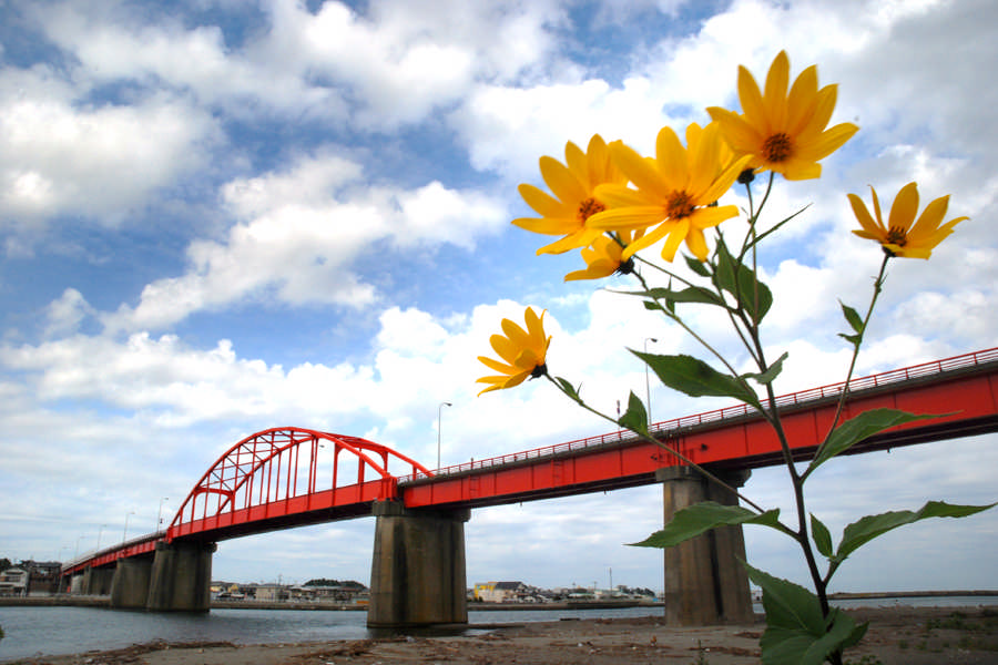 Kaimon Bridge and Flowers