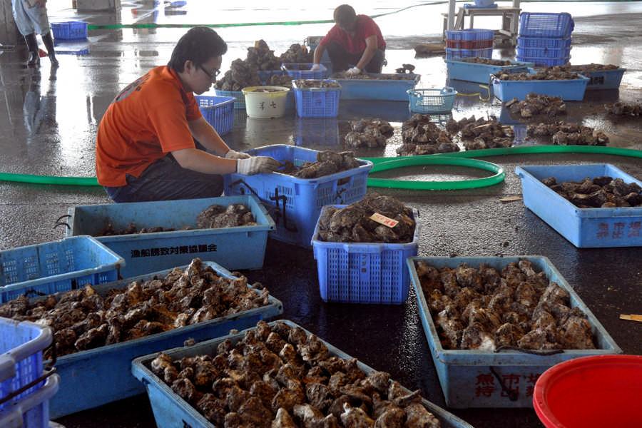 捕捞岩牡蛎