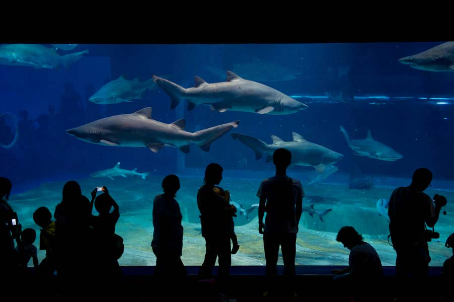 アクアワールド サメの水槽