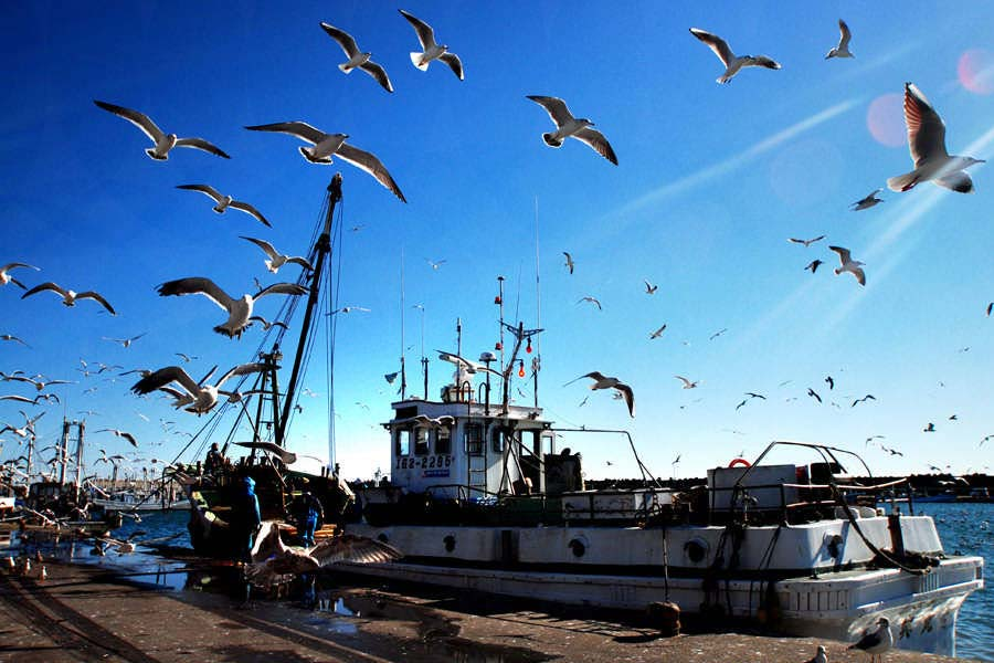 漁船と海鳥の群れ