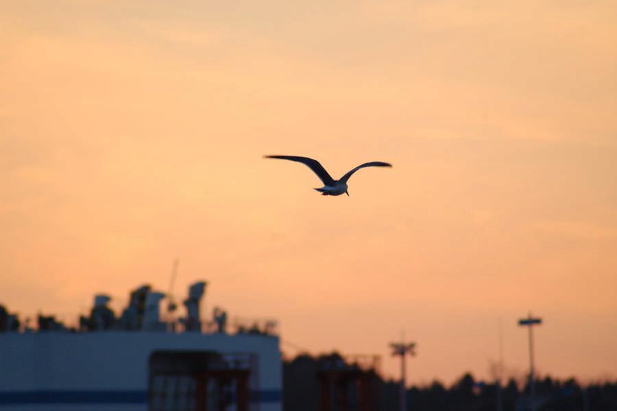 渡轮和海鸟
