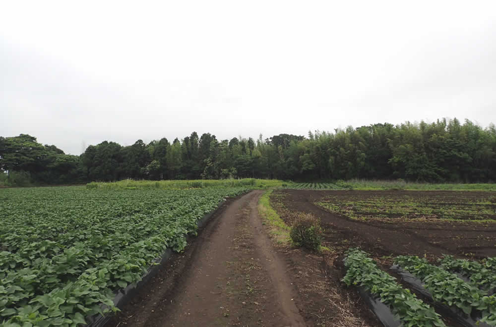松川陣屋跡の景色
