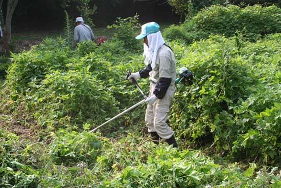 日下ヶ塚古墳の除草作業